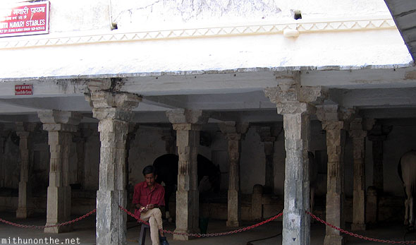 Udaipur city palace horse stables Rajasthan