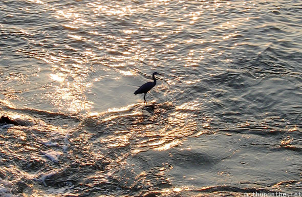 Bird sea water Calicut sun shimmer Kerala