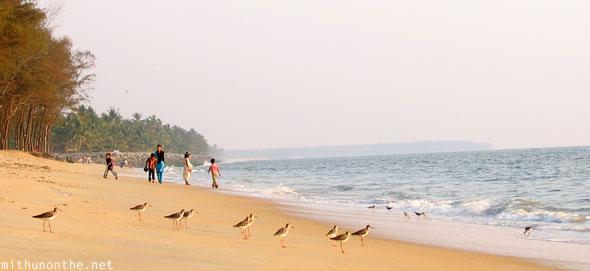 Birds on Kappad beach Kozhikode Kerala