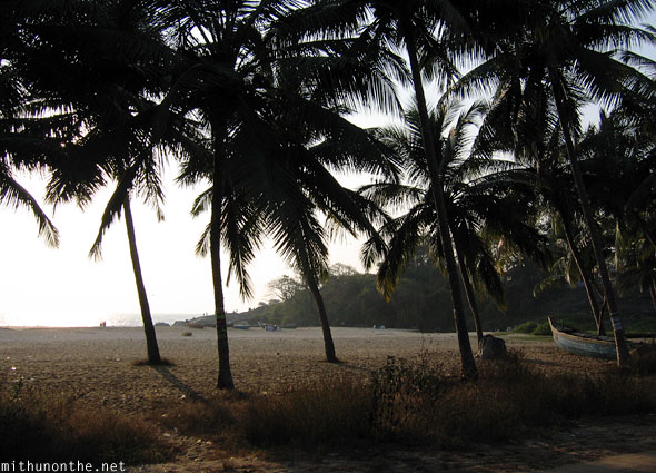 Kappad beach coconut trees Kerala