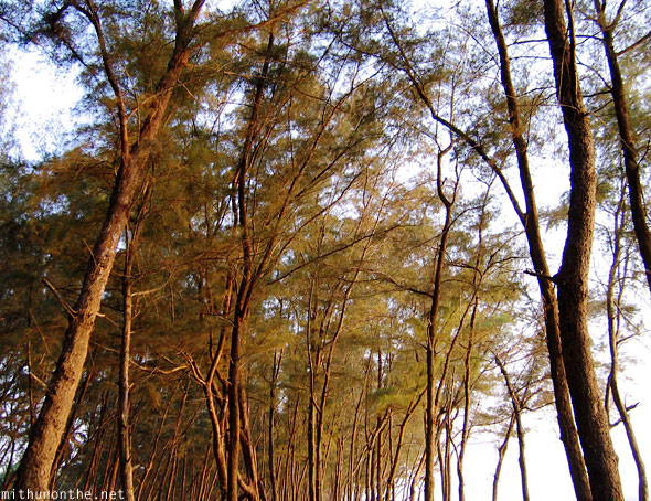Trees Kappad beach seaside Kozhikode India
