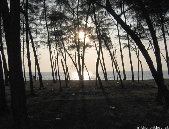 Trees shadow evening sunset Kappad beach Kerala