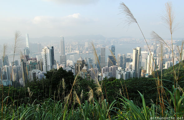Plants Victoria peak Hong Kong