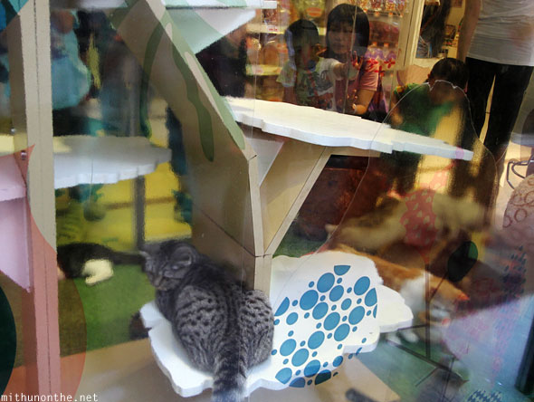 Cats for sale pet store Mong Kok Hong Kong