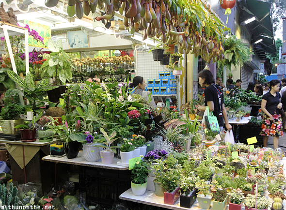 Flower market plants Hong Kong