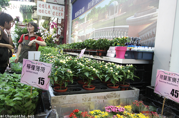 Lemon mint plant flower market Hong Kong
