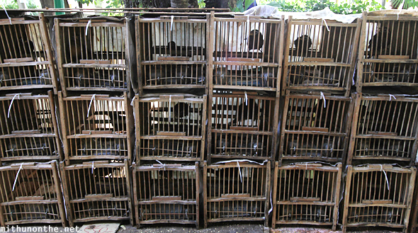 Box cages bird market Hong Kong