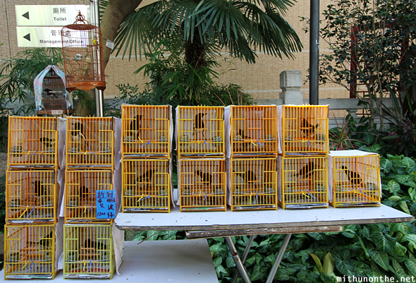 Yellow bird cages Hong Kong China
