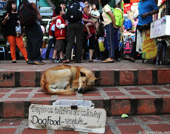 Dog food steps Doi Suthep Chiang Mai