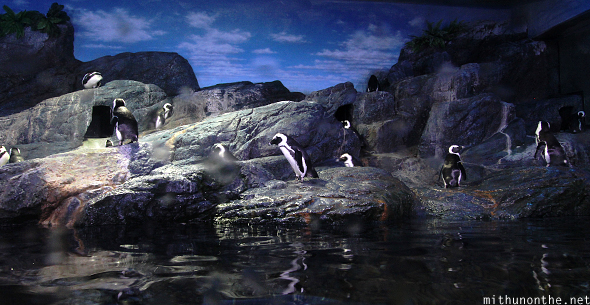 Penguins Siam Ocean World Thailand