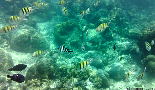 School of fish snorkeling Boracay Philippines
