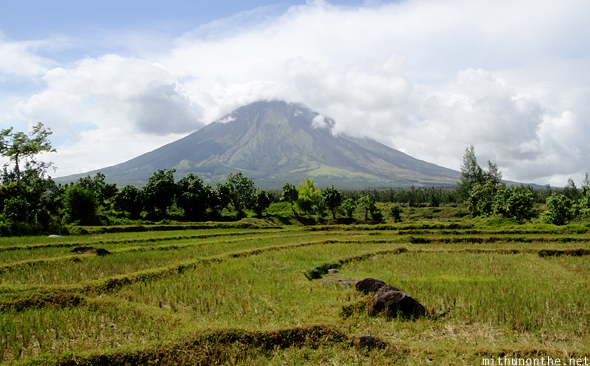 Bicol paddy fields Mt. Mayon background