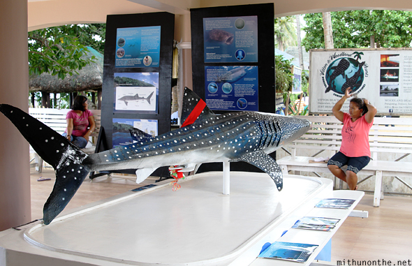 Butanding whale shark model Donsol Philippines
