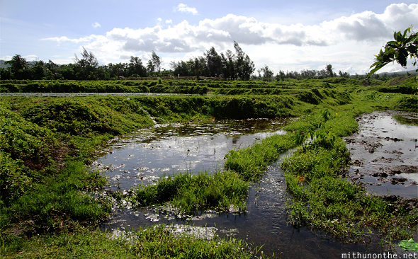 Farm water puddles Bicol