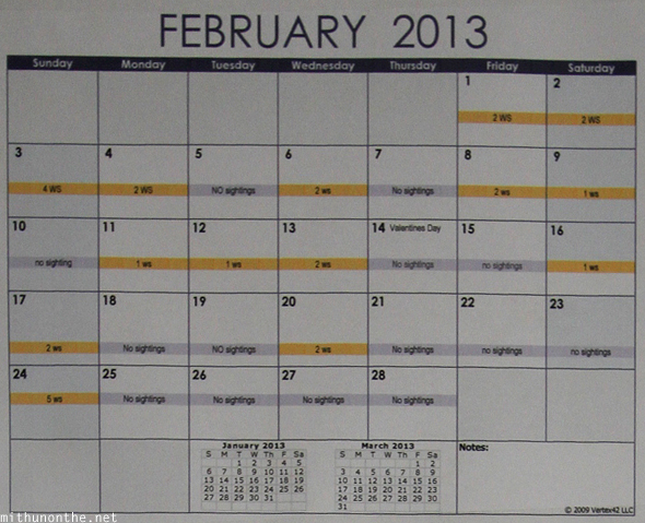 February 2013 Butanding sightings