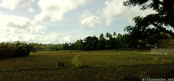 Rice paddy field Philippines