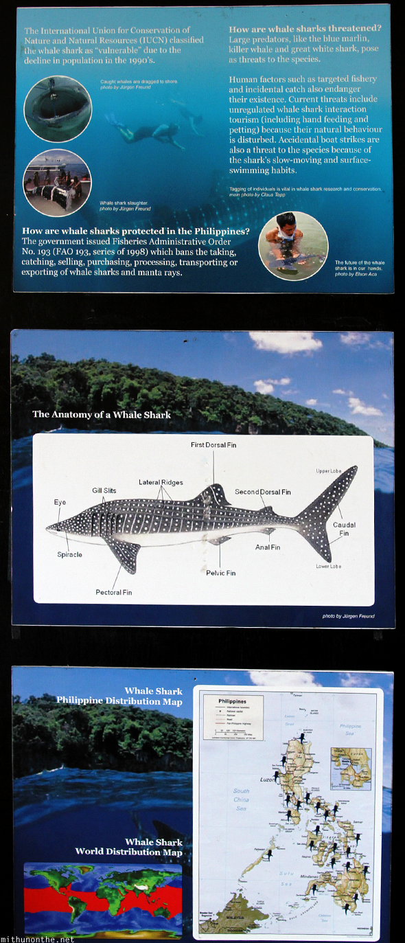 Whale shark facts information