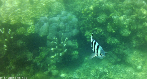 Coral reef fish Coron