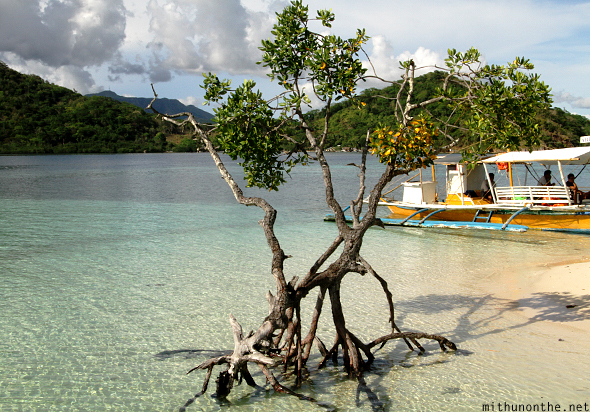 CYC island beach tree Coron Philippines