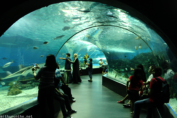 Aquarium tunnel Ocean park Manila