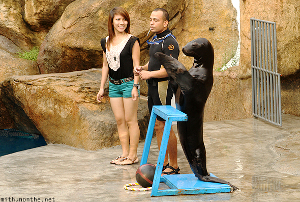 Sea lion clapping Manila Ocean Park