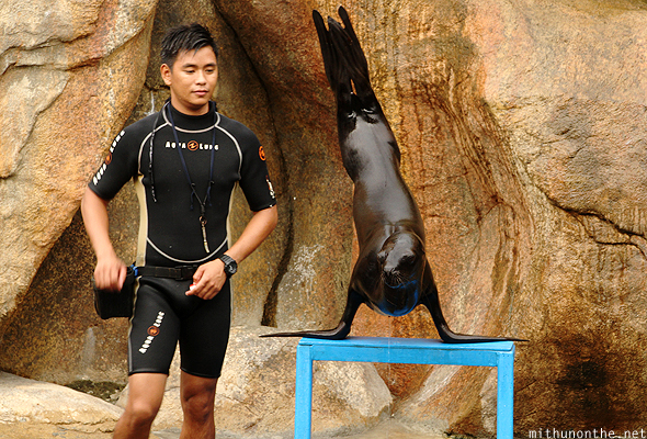 Sea lion standing on feet Ocean Park