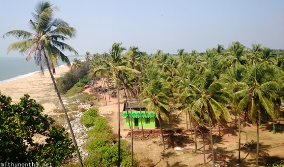 Bekal village coconut trees by beach