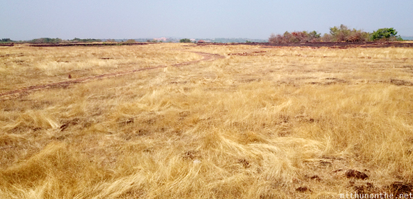 Dry brown grass Kannur Kerala