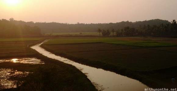 Sunset Kerala paddy field