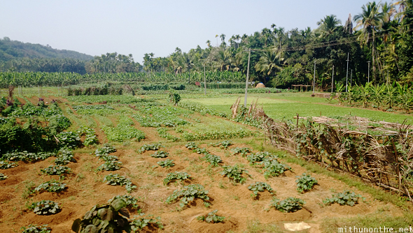 Vegetable farm Kannur Kerala