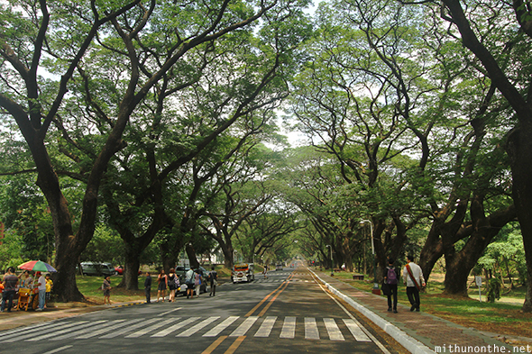 UP Diliman main road trees