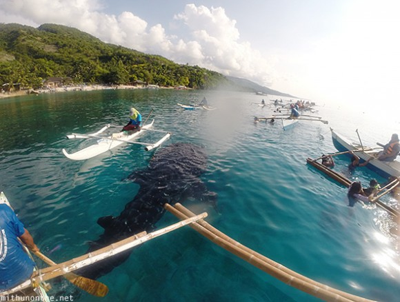 Oslob whale shark from above water