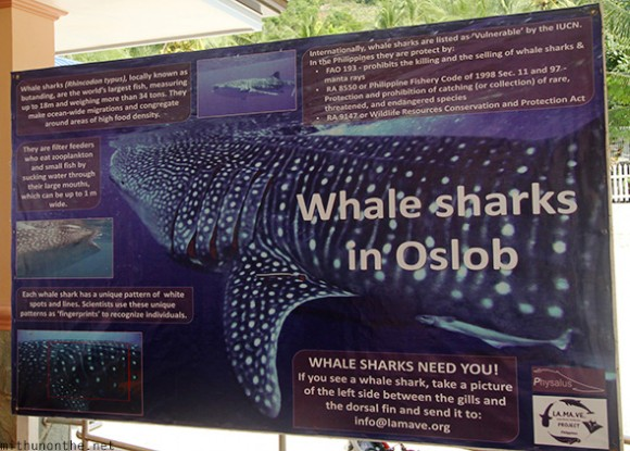 Whale shark information Oslob