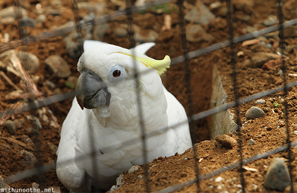 Cockatoo Eden Nature park Davao