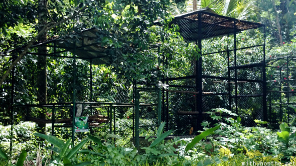 Eagle cages Davao Philippines