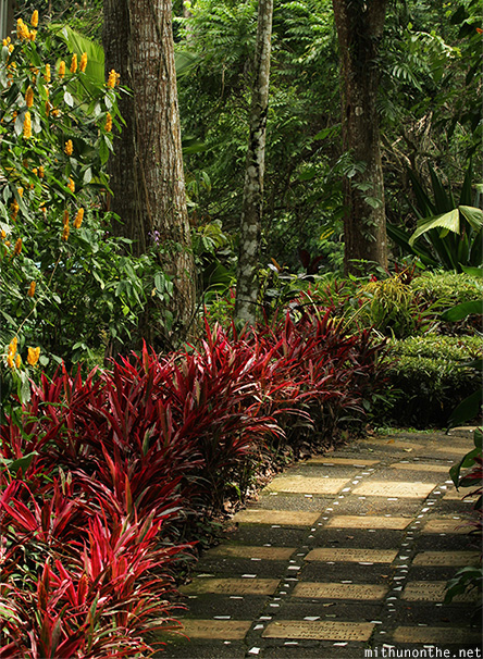 Garden plants Philippine eagle center