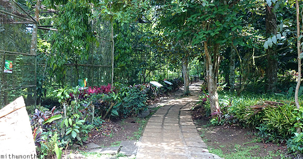 Philippine eagle center cages