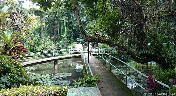 Philippine eagle center pond Davao