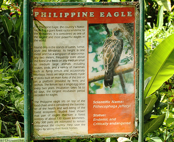 Philippine eagle facts Davao