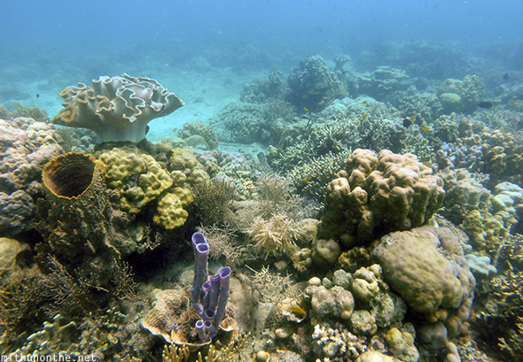 Coral reef in Davao Philippines
