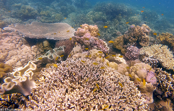 Coral beds Samal islands Philippines