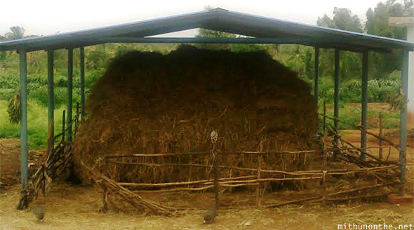 Hay farm shed cow feed Bangalore