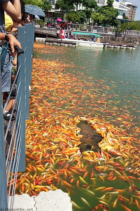 Philippines bargain shopping in manila paseo de santa for Laguna koi ponds