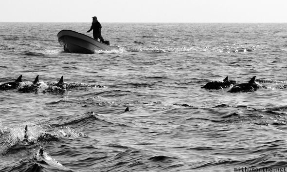 Dolphin boat chaser Oman