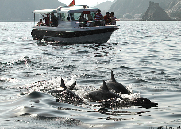 Dolphin watching boat tour Oman