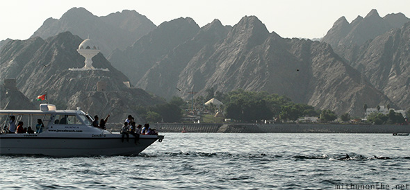 Dolphin watching tour Muscat Oman