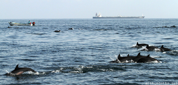 Dolphins swimming container ship