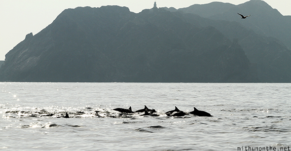 Muscat hill silhouette dolphins Oman