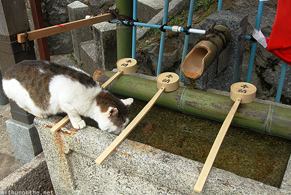Cat drinking temple water Japan