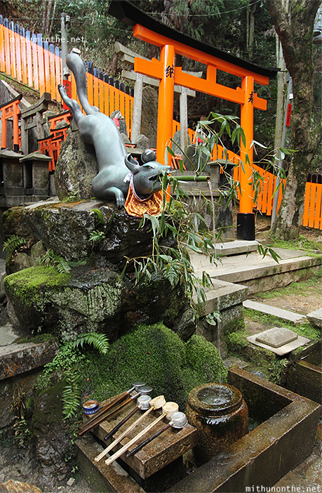 Fox fountain Fushimi Inari temple